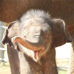 baby_elephant_1.jpg